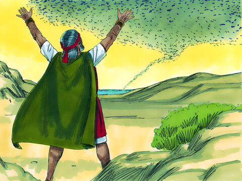 When Moses left Pharaoh and prayed, the wind changed direction and blew from the west, carrying the locusts into the Red Sea. – Slide 5