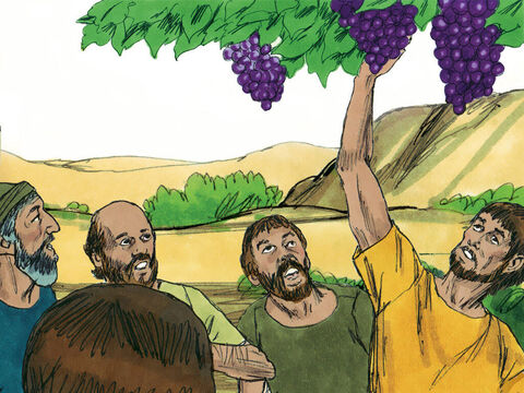 When they reached the Valley of Eshkol,they cut off a branch bearing a single cluster of grapes. – Slide 10