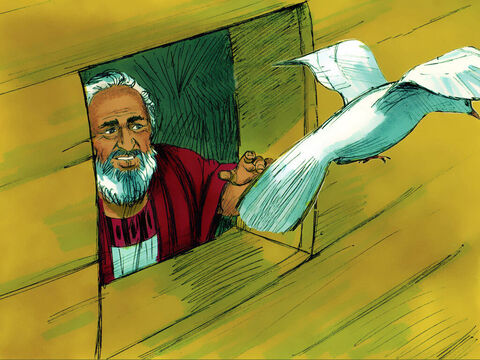 Then he sent out a dove. It flew around looking for land. – Slide 16