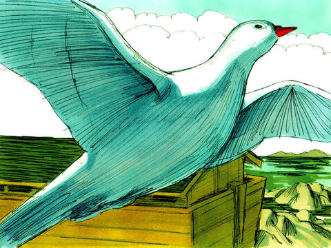 Seven days later he sent out the dove again. – Slide 18