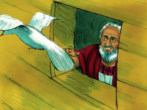 A week later he sent out the dove a third time but it did not return. Noah knew that the dove had found land. – Slide 20