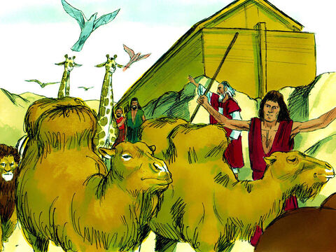 Noah removed the roof of the ark and saw the land was drying out. Two months later the land was dry enough for Noah, his family and the animals to leave the ark. – Slide 21