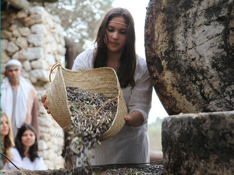 However to get olive oil on a larger scale an olive press was used. – Slide 10