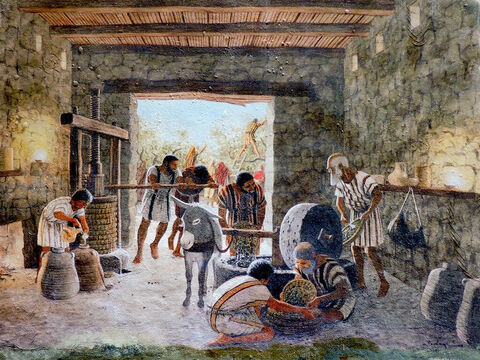 There were two main types of olive press in Bible times. A circular press with a grinding stone and a beam and weights press. In later Roman times, screw presses were used. The garden of Gethsemane was an olive orchard and the word gethsemane means 'oil-press'). This painting on the wall of the Katzrin Museum is by Balage Balogh/www.Archaeologyillustrated.com. – Slide 11