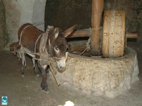 Here a donkey is being used to pull a grinding stone around in Nazareth. – Slide 16