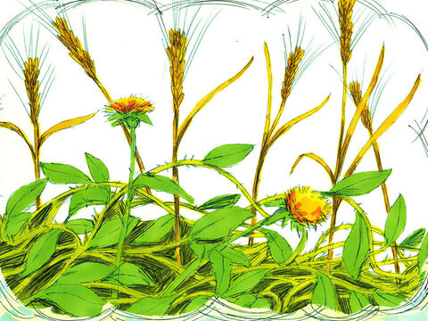 Other seed fell among thorns which grew up and choked the plants so they did not bear grain. – Slide 5