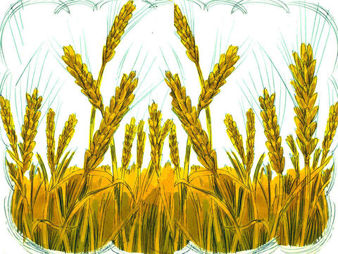 The remaining seed fell on good soil and produced a crop. Some seeds bore grain that produced 30 times more. Some seed were 60 times more productive. Some produced 100 times more grain. – Slide 6