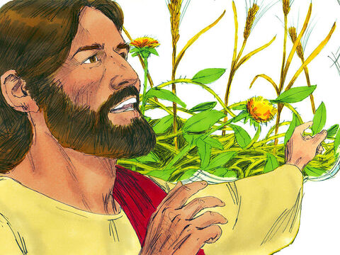 Some are like the seed sown among thorns. They hear what God says but the worries of life, the deceitfulness of wealth and the desire for other things make them unfruitful. – Slide 13
