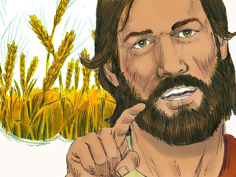 But others are like the seed sown on good soil. They hear God's word and obey it. – Slide 14