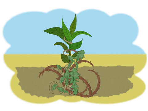 'Some seed,' said Jesus, 'fell onto better ground and began to grow into a plant but there were lots of thorns and weeds in the soil and soon they began to choke the plant and stopped it from growing.' – Slide 5