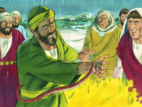 The people of the island were very kind and as it was cold and rainy, they built a fire on the shore to welcome them. As Paul was putting an armful of sticks on the fire, a poisonous snake, driven out by the heat, bit him on the hand. – Slide 2