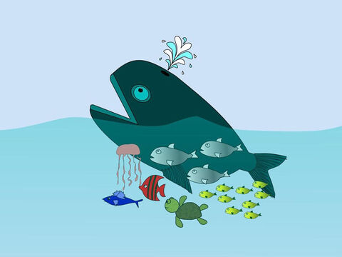Next God created every kind of creature that swims in the sea like the great whales and all those animals that live in the waters. – Slide 7