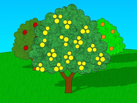 God warned Adam that he could eat from any of the trees in the garden except from the tree of the knowledge of good and evil. If Adam ate the fruit from this tree he would die. – Slide 3