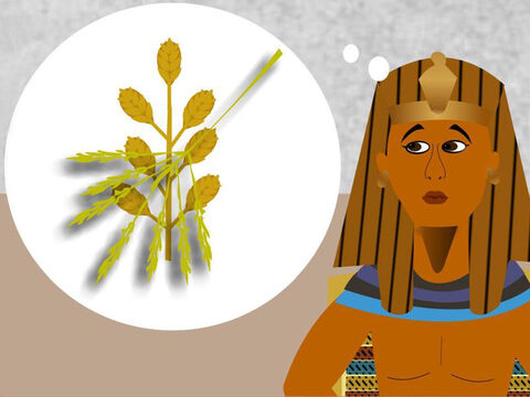 In another dream Pharaoh saw 7 fat ears of grain growing on one stalk. Then he saw 7 thin ears of grain eat up the 7 fat ears of grain. Pharaoh had woken up very worried about the dreams and what the dreams meant. – Slide 10
