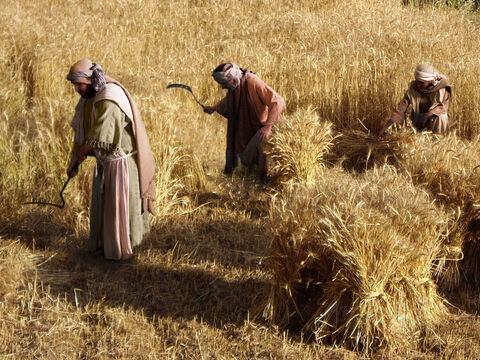 Luke 15 v 11 The father and his two sons working in their fields. – Slide 1
