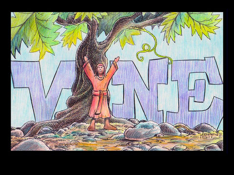 'I am the true vine, and my Father is the gardener.' John 15:1 – Slide 25