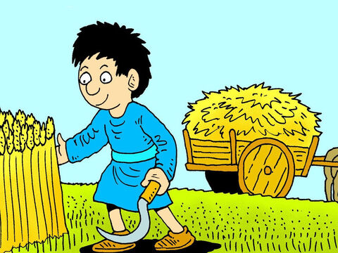 What did Jesus mean when He said Peter would be sifted like wheat? Wheat is cut at harvest time. – Slide 2