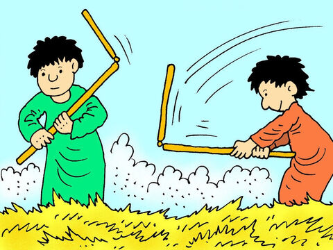 The long stalks have ears of grain. Farmers at that time put the wheat on the ground and used long sticks to thresh the wheat. Threshing involved a lot of trampling, hitting and bashing to remove the grain from the husks and straw. – Slide 3