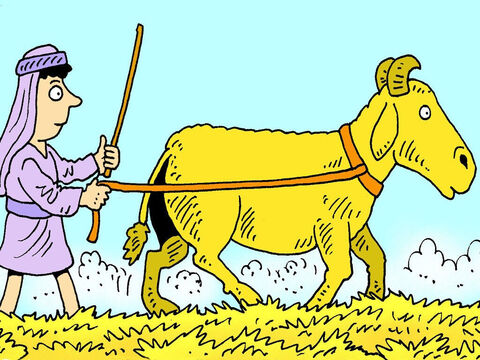 Sometimes farmers used cattle to stomp and crush the wheat to remove the grain from the stalk. – Slide 4