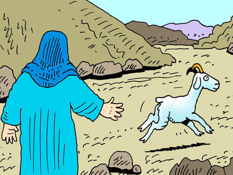 The other goat was to be kept alive. The priest would lay his hands on it as a picture to show that the sins of the people were put on the goat. It was then led off into the wilderness and released to run off and never be seen again. – Slide 2