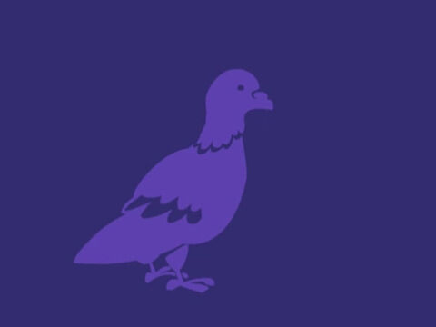 '… and a young pigeon.' – Slide 7