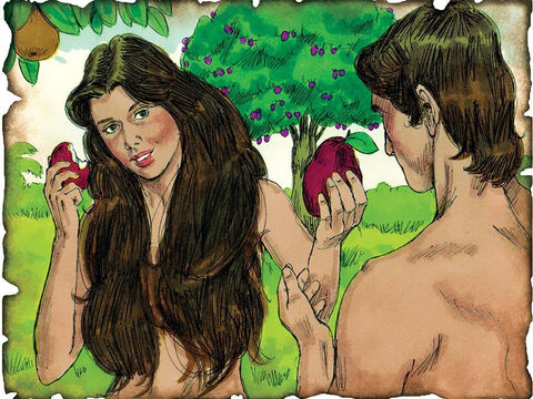 "Man Sins! 4000 B.C. or Earlier. Genesis 3: Adam and Eve disobey God and eat of the forbidden fruit in the Garden of Eden. Then the serpent said to the woman, ""You will not surely die. For God knows that in the day you eat of it your eyes will be opened, and you will be like God."" – Slide 3"