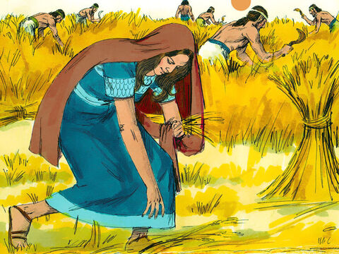 After Naomi and Ruth arrive in Bethlehem they needed food. 'Let me go into the barley fields to pick up the leftover grain.' The poor were allowed to pick up grain that the harvesters had left on the ground. 'Go ahead, my daughter,' Naomi replied. – Slide 1
