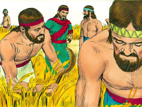 Ruth went into the fields belonging to Boaz. Boaz was a relative of Noami's dead husband Elimelek. Later Boaz arrived and greeted the harvesters. 'The Lord be with you.' The harvesters replied, 'The Lord bless you.' – Slide 2