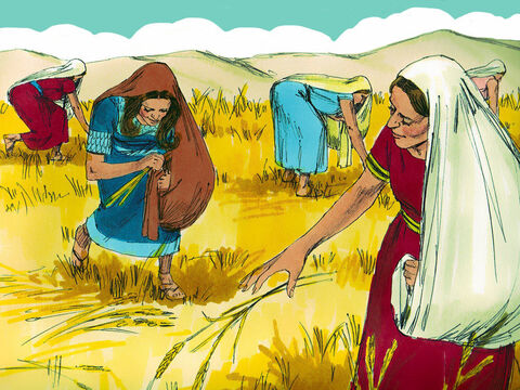 From that point on Ruth continued gathering grain in the fields belonging to Boaz. She stayed close to the other women gathering grain knowing she would be safe. She worked hard in the barley harvest and then in the wheat harvest that followed making sure that Naomi had enough food to eat. – Slide 11