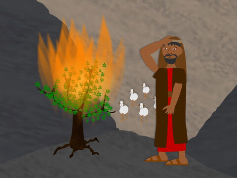 As he was looking after the sheep, Moses saw a flame of fire set a bush alight, but the fire did not destroy the bush. The bush kept burning. Moses went to see this amazing sight and heard the Lord speak to him out of the flames. God told Moses to take off his sandals because the ground he stood on was holy. So Moses obeyed. – Slide 2