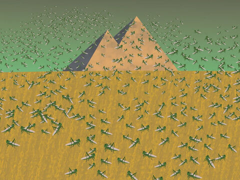 So God sent another plague on the Egyptians because of Pharaoh's disobedience. A swarm of locusts covered the whole land and ate all the fruit on the trees and herbs and everything green in the fields. But even after all the crops were eaten, Pharaoh shook his head and said, 'No' to releasing the slaves. – Slide 15