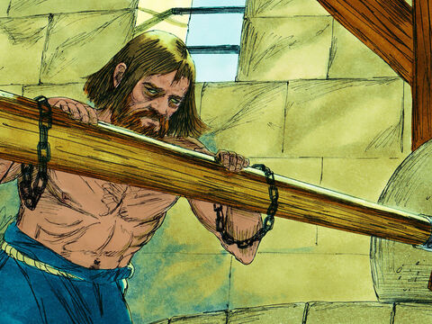 Samson suddenly realised God's power had left him. He was powerless. The Philistines captured him, gouged out his eyes, put him in chains and forced him to grind grain in prison. But before long, his hair began to grow back. – Slide 12