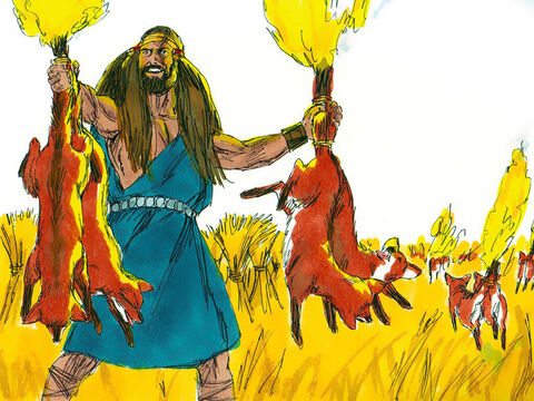 Samson went out and caught 300 foxes. He tied their tails together in pairs, and fastened a torch to each pair of tails. Then he lit the torches and let the foxes run through the grain fields of the Philistines. – Slide 2