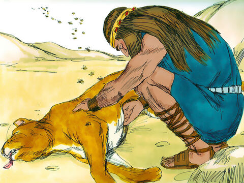 As Samson and his parents were going down to Timnah, a young lion suddenly attacked Samson. The Spirit of the Lord came powerfully upon him, and he ripped the lion's jaws apart with his bare hands. Later, when he returned to Timnah for the wedding, he turned off the path to look at the carcass of the lion. He found that a swarm of bees had made some honey in the carcass and scooped some of the honey into his hands and ate it. – Slide 14