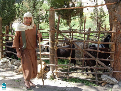 The staff was used to guide sheep or hook them out of danger. Psalm 23 talks about a shepherd's rod and staff being a source of comfort to the sheep. – Slide 6