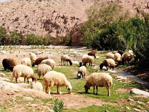 It was very important to find water for the sheep. Shepherds led their flocks to flowing water that did not flow so quick as to agitate the sheep (Psalm 23:2). – Slide 12