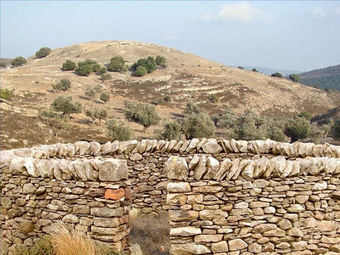 More permanent sheepfolds were built on the sunny side of valleys where there is protection from cold winds. These had stone walls, 4-5ft high and one entrance guarded by the shepherd. Thorns were often put on the top of walls to deter wild animals. Jesus referred to such a sheepfold and to thieves and robbers climbing over the wall (John 10:1-3). – Slide 16