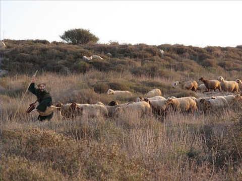 Shepherds in the Middle East do not drive their sheep but lead them and they follow. A helper may follow on behind the flock to help stragglers (John 10:4). – Slide 18