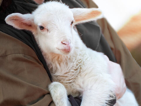 Jesus told a parable about a good shepherd who went searching for one of his sheep that was lost. – Slide 21