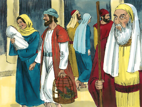 Forty days after Jesus was born, Mary and Joseph took Jesus to the Temple for the ceremony of purification (Leviticus 12:2-6, 8). A lamb was normally brought as an offering but as Mary and Joseph were poor they brought an offering of a pair of doves or pigeons. – Slide 2