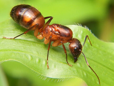 'Ants are creatures … <br/>Picture credit: Rison Thumboor. – Slide 2