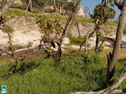 Terraces supported with low stone walls were often cut into hillsides to grow grapes. – Slide 6