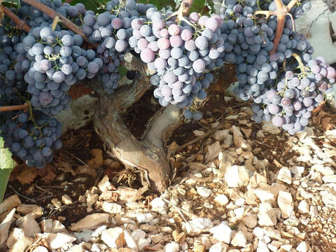 Large stones were removed but small stones aid the retention of moisture in the soil. – Slide 8