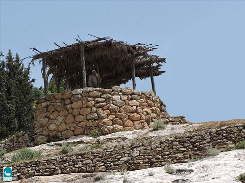 A watchtower was built on a high spot where a watchman could overlook the vineyard. – Slide 10