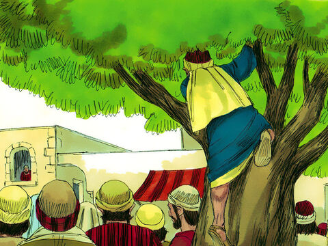 So he ran on ahead and climbed up in a sycamore tree so he could see Jesus when He came by. – Slide 4